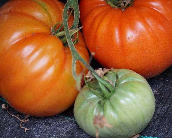 Autres fruits et légumes