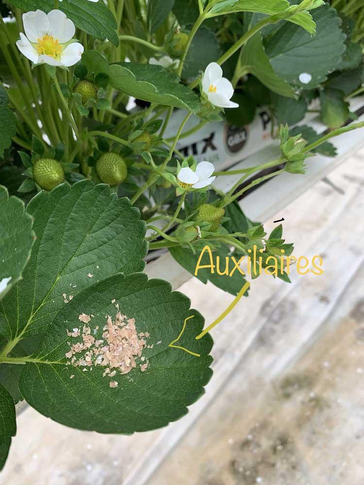 Production de la fleur au fruit